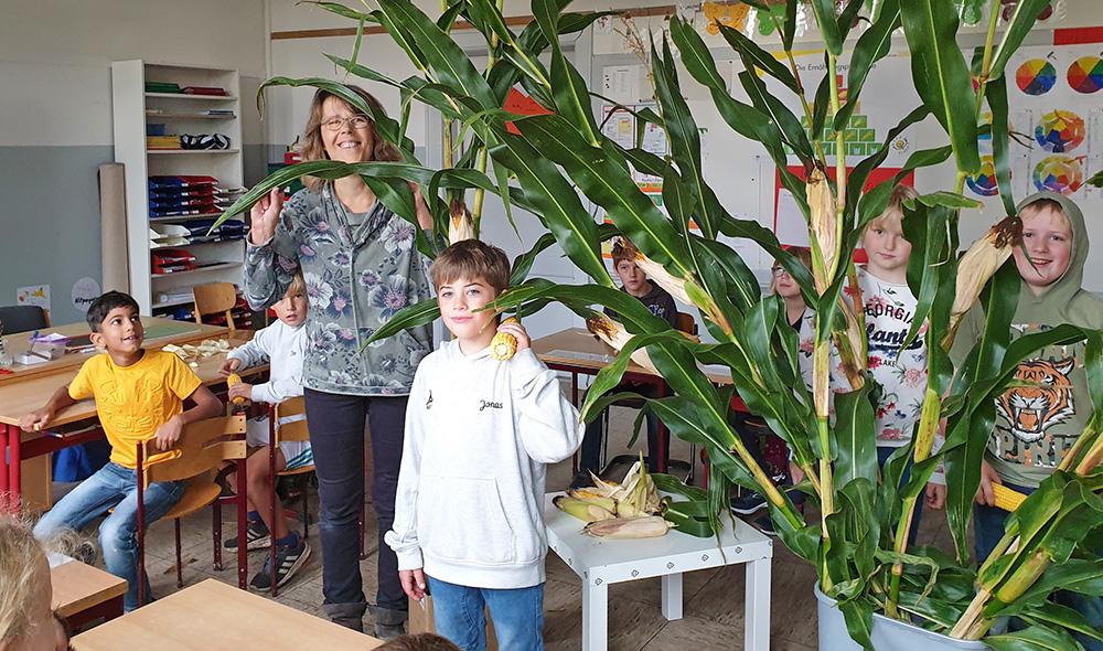Vorstellung Mais-Pflanze